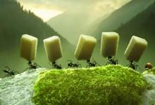 Minuscule – La valle delle formiche perdute